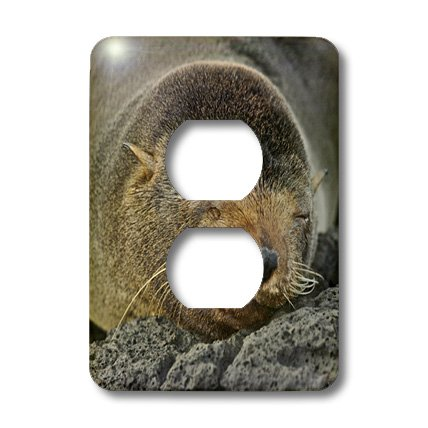 Fur Seal Islands - 3dRose lsp_10132_6 Galapagos Fur Seal,Arctocephalus Galapagoensis,Santiago Island Galapagos 2 Plug Outlet Cover
