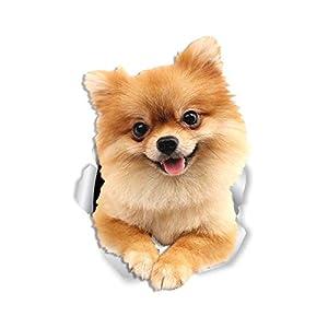 Winston & Bear Cute Pomeranian Dog Wall Decals - 2 Pack - German Spitz Dog Toilet Sticker – 3D Dog Car Window and Bumper Sticker - Retail Packaged Pomeranian Lover Gifts 1