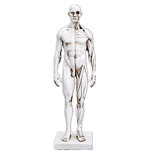 Interior Decoration Halloween Gifts The Human Body Muscle Model Teaching Supplies Medical Model (Medical Halloween Decorations)