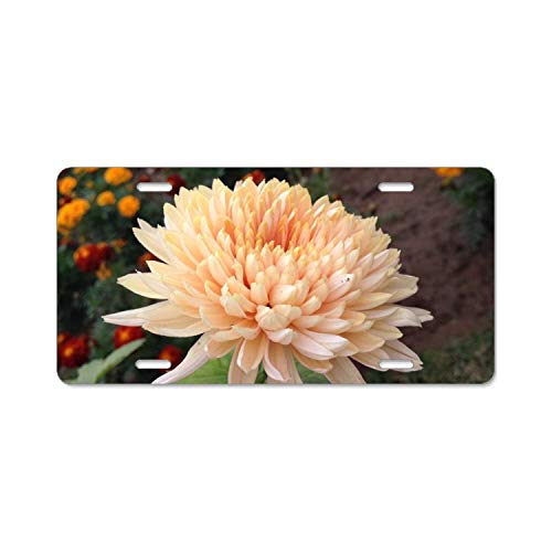 YEX Beautiful_Chrysanthemum License Plate Frame Car Licence Plate Covers Auto Tag Holder Tag Sign 12