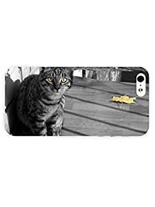 3d Full Wrap Case for iPhone 5/5s Animal Grey Cat45