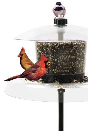 Droll Yankees Inc The Jagunda Squirrel Proof Bird Feeder With Auger Built-In Seed Valve by Droll Yankees