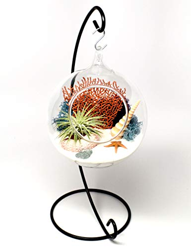Pixie Glare Hanging Glass Terrarium 4.75 Inch Diameter with 11 Inch(H) Metal Display Stand. Ocean Scene with Air Plant & Accessories (White