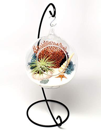 Pixie Glare Hanging Glass Terrarium 4.75 Inch Diameter