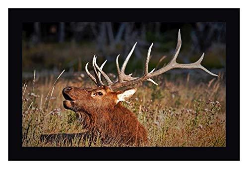 (Bull Elk by John Stalowy - 21