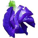アントシアニンを豊富に含む バタフライピー (二重咲きの花) 種 4粒