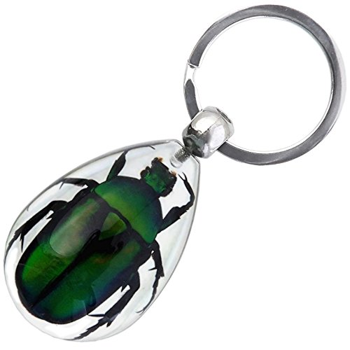 (Real Insect Key Chain - Green Rose Chafer Beetle)