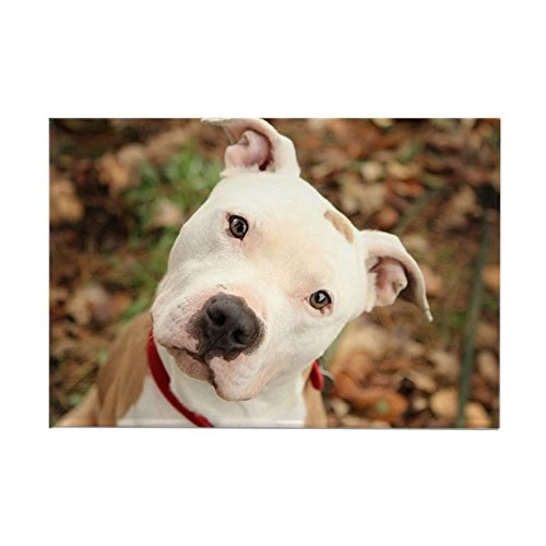 CafePress Pitbull Rectangle Magnet, 2
