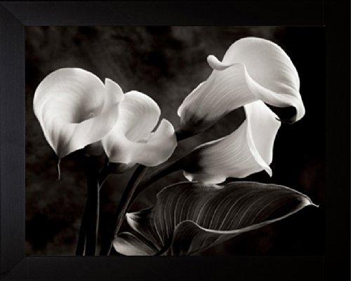 Calla Lilies No. 1 - Sondra Wampler (Sondra Wampler Calla Lilies)