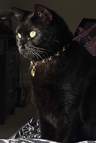 Buy collar for cats