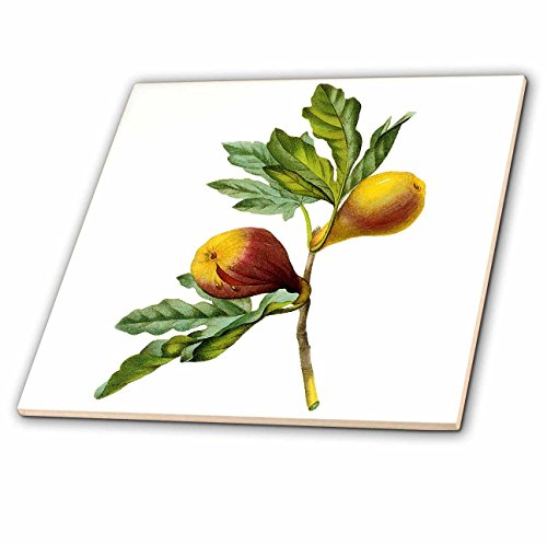 Ceramics Fig (3dRose ct_106854_2 Redoute Vintage Watercolor Fruit Fig Ficus Violacea-Ceramic Tile, 6