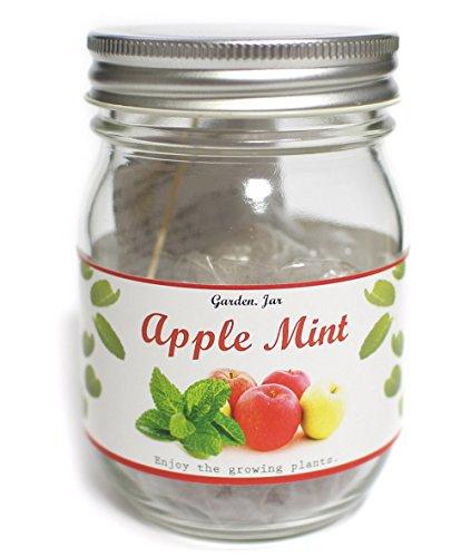 -  nagakura Garden Jar Apple Mint