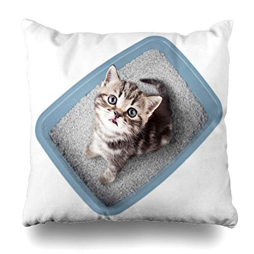 - Ahawoso Throw Pillow Cover Square 16x16 Inches Urinate Blue Absorbent Cat Sitting Litter Box Top Brown Breed British Brittish Clay Clean Design Cushion Pillow Case Home Decor Zippered Pillowcase