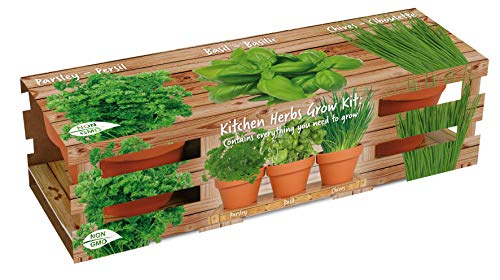 Healthy Kitchen Herb Trio Grow Kit | Grow Basil, Parsley and Chives | Grow a Herb Garden from Seed in Unique Terra Cotta Pots | GMO Free Herbs | Exclusively by TotalGreen Holland (Best Herbs To Grow In Pots Indoors)