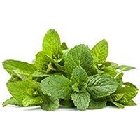 Mentuccia foglie secche - 150g