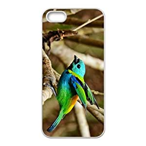 Chloebiagouldiae With Colorful Feathers Hight Quality Plastic Case for Iphone 5s