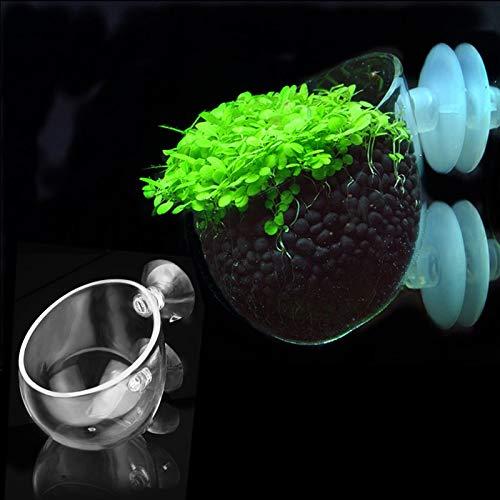 VietGT Decorations - Crystal Glass Aquarium Grass Planting Cup Fish Tank Water Plant Cylinder Cup Mini Bonsai Pot for Plant Weed Aquarium Decoration 1 Pcs ()