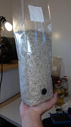 PF Tek Bag with injection port  3 lbs of Mushroom Substrate - Import It All