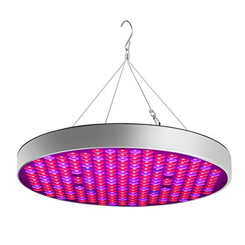 Shenzhen Led Grow Light Factory in US - 2