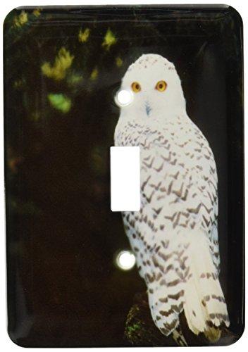 Northwest Switchplate - 3dRose lsp_95801_1 Usa, Washington, Northwest Trek Snowy Owl Us48 Jme0424 John & Lisa Merrill Single Toggle Switch