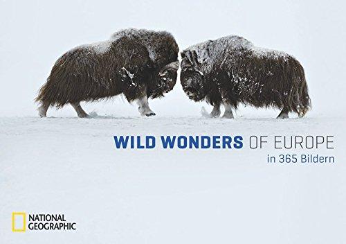 Wild Wonders of Europe in 365 Bildern: Tischkalender m. immerwährendem Tages-Kalendarium