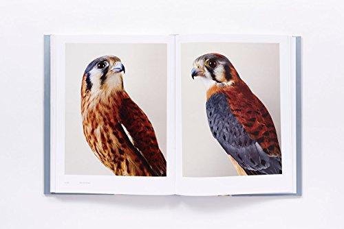 Bird Love by ABRAMS (Image #6)