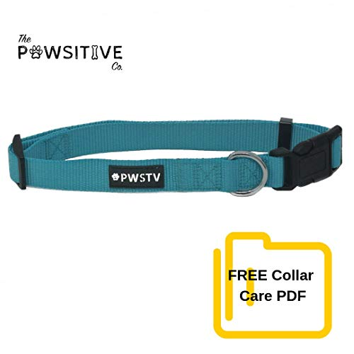Dog Collar, Buy a Collar. Feed a Dog. The Pawsitive Co Durable Nylon Puppy and Dog Collars with Chrome Plated D Ring - Medium - Turquoise (Nylon Puppy Collar Dog)