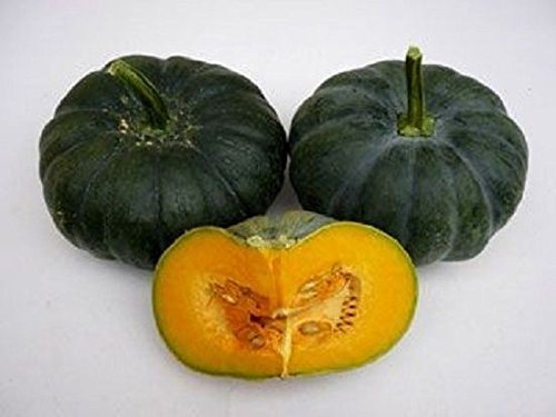 Pumpkin Seeds,(Jade Prince),West Indian Flat pumpkin, winter squash, calabaza (10 Seeds) (Tree 2 1 Mound Flower)