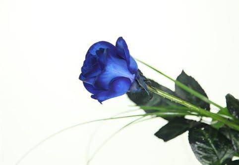 inkl Deluxe Edle blaue Rose gratis Kultvase
