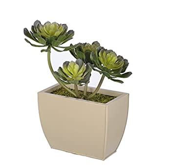 House of Silk Flowers Artificial Aeonium Succulent in Small Beige Zinc