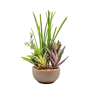 OneHippo Mini Potted Artificial Succulents Plants Mixed Small Fake Plants About 11 inches with Potted for Home Décor 97