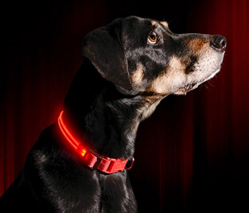 LED Dog Collar - USB Rechargeable - Available in 6 Colors & 6 Sizes - Makes Your Dog Visible, Safe & Seen (Pink Red Dog Collar)