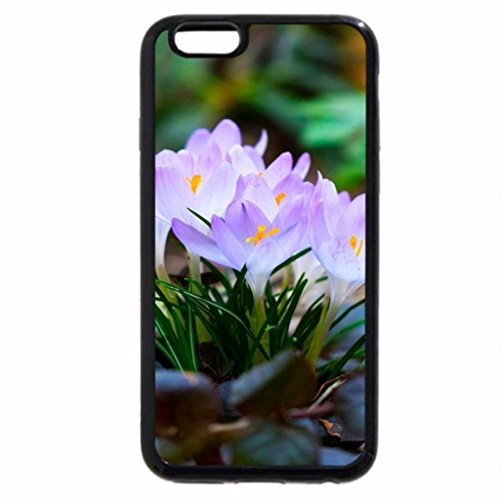 iPhone 6S / iPhone 6 Case (Black) light crocuses