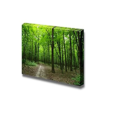 Canvas Prints Wall Art - Beautiful Scenery/Landscape Quiet Path in The Green Forest | Modern Wall Decor/Home Decoration Stretched Gallery Canvas Wrap Giclee Print & Ready to Hang - 16