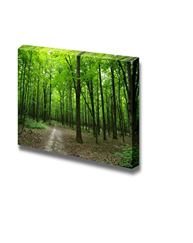 Beautiful Scenery Landscape Quiet Path in the Green Forest Wall Decor ation