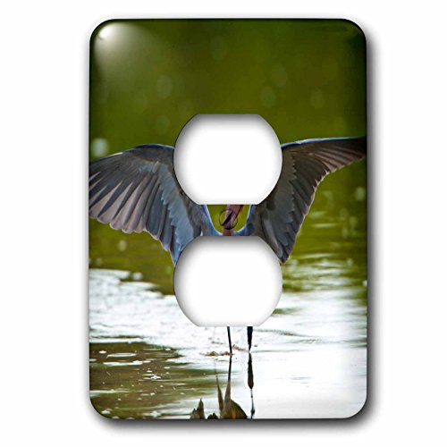 Danita Delimont - Birds - Florida, Sanibel Island, Ding Darling, Egret hunting - Light Switch Covers - 2 plug outlet cover - Florida Outlets Sanibel