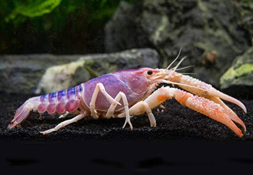 lobster tank - 5