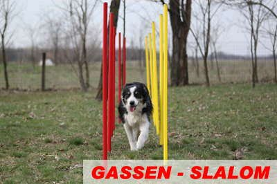 flexibles ronds Kit piquets de slalom rouge//jaune AGILITY SLALOM
