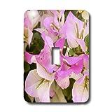3dRose LLC lsp_7447_1 Bougainvilla Pink Single Toggle Switch