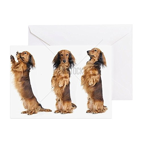 Price comparison product image CafePress - A Dachshund Begs For A Treat. Studio - Greeting Card,  Note Card,  Birthday Card,  Blank Inside Matte