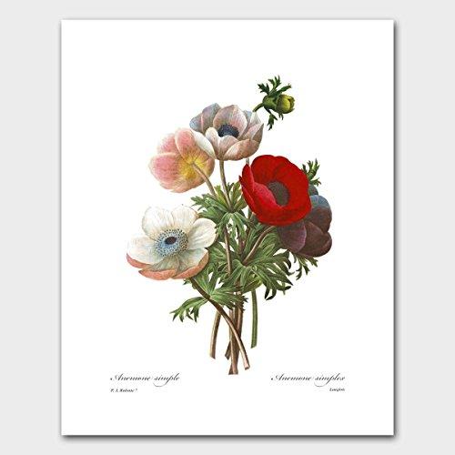 Simplex Print (Poppy Flower Art (Botanical Home Illustration, Redoute Wall Decor) Garden Artwork Print – Unframed)