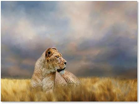 Lioness After The Storm