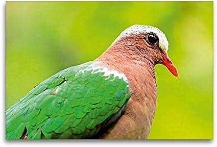 Premium - Lienzo de tela (120 x 80 cm, horizontal, aspecto exótico, paloma marrón con pico rojo, cuadro sobre bastidor) Stephani, Taiwan, Asia (CALVENDO Animal);CALVENDO Animales