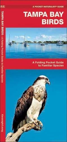 Tampa Bay Birds: A Folding Pocket Guide to Familiar Species (A Pocket Naturalist Guide)