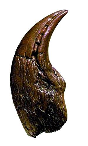 aurus Claw (Dino Claw)