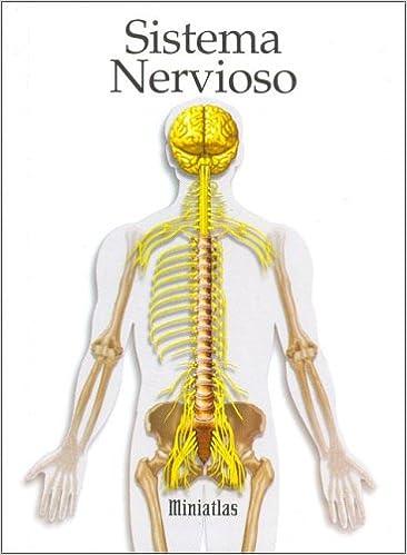 Sistema Nervioso Spanish Edition Raul Luis Lepori
