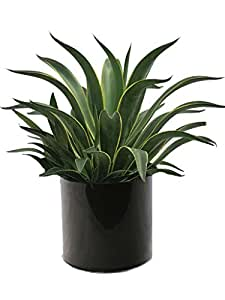 Live 2' Agave package (Black)