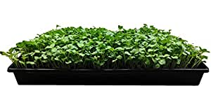 GardenBox: Easy-to-Grow Micro Greens & Herb Gardens