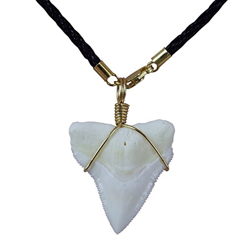 25mm Rope Chain (GemShark Real Bull Shark Tooth Necklace Gold 14 K Plating Black Cord Choker Pendant Double Best Friend (1.0 inch Bull))