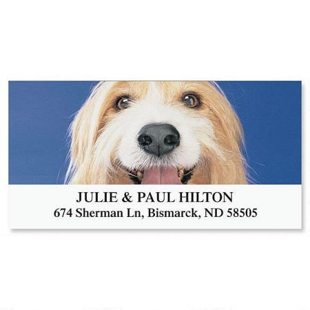 Shaggy Dog Personalized Return Address Labels- Set of 144, Large Self-Adhesive, Flat-Sheet Labels, By Colorful Images